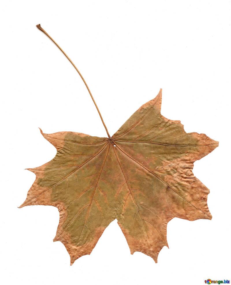 Dry leaf texture №42663