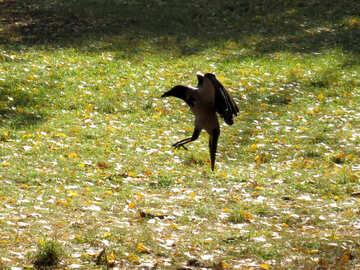 Crow hunting №43213