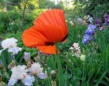 Summer flowers №43031