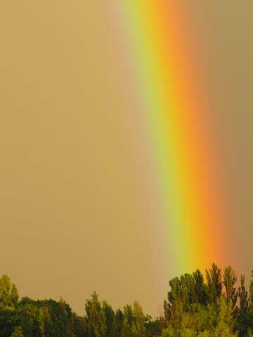 Regenbogen Hell №43249