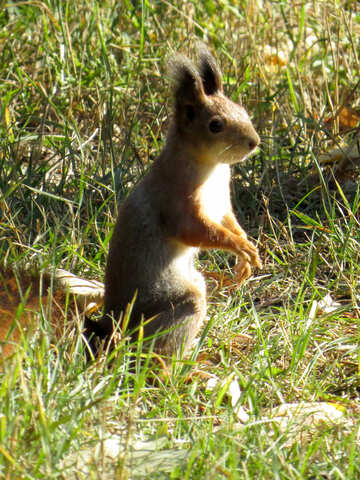 Squirrel sitting №43190