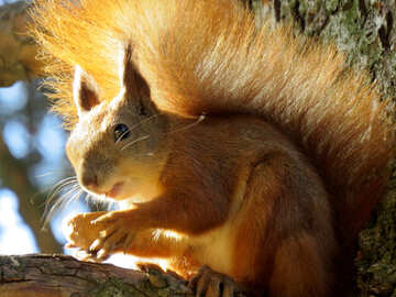 Squirrel holding a nut №43161