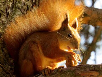 Eichhörnchen mit einer Mutter auf einem Baum №43162