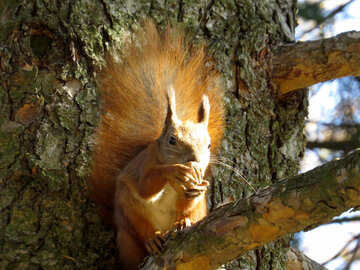 Squirrel sitting on the tree №43177