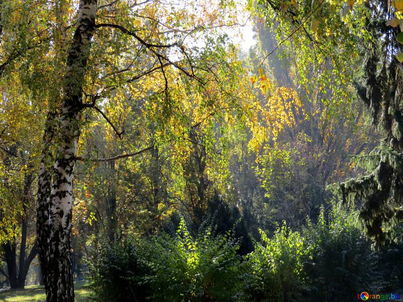 Belle forêt №43209