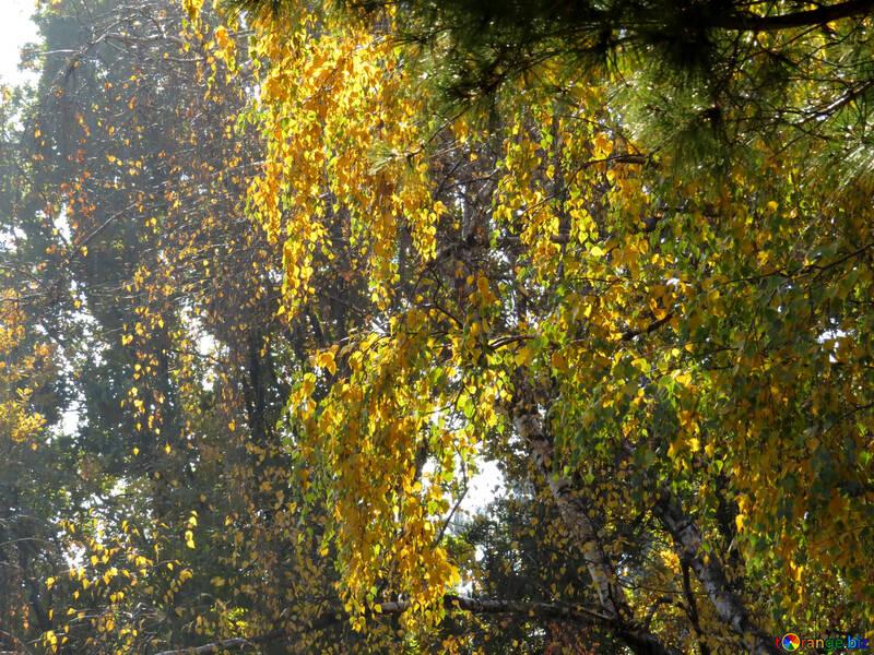 Hojas en el bosque iluminado por el sol №43203