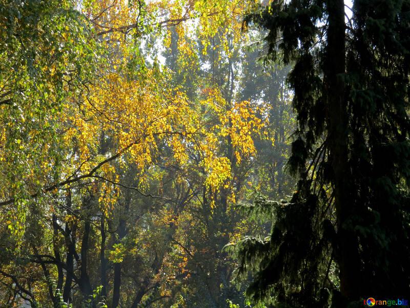 Soleil dans la forêt d`été №43208