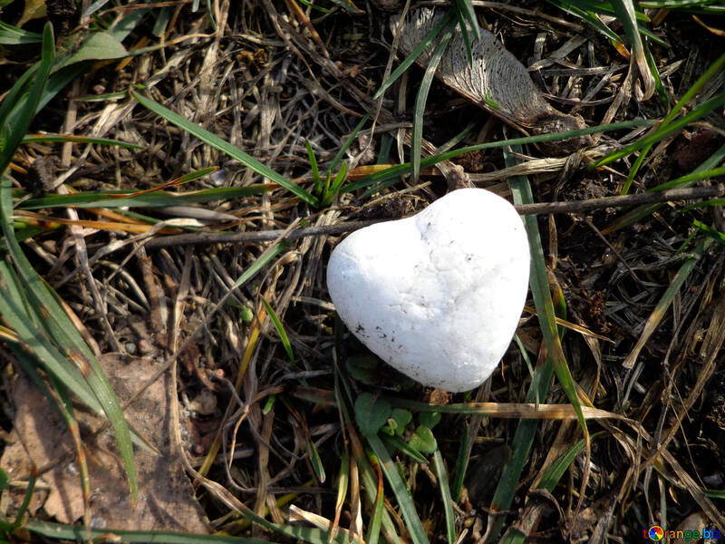 Heart  from snow on  grass  №43082