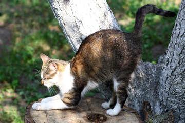 Cat sitting on a tree №44940
