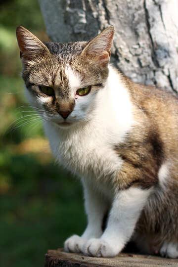 Cat sitting on a tree №44943