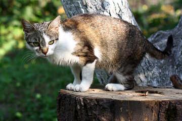 Cat sitting on a tree №44942