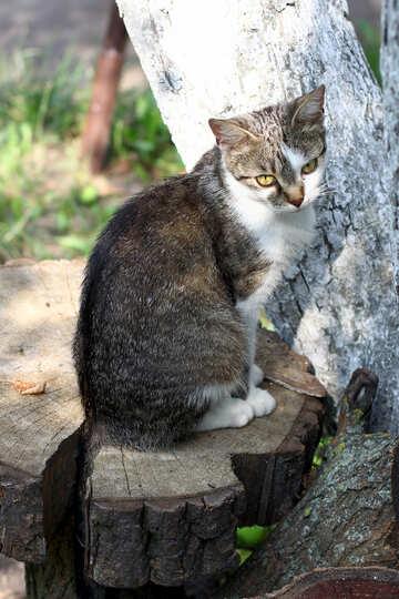 Cat sitting on a tree №44944