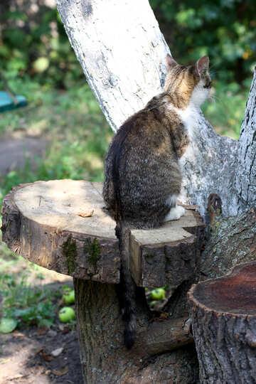 Cat sitting on a tree №44946