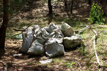 Garbage bags in the woods №44827