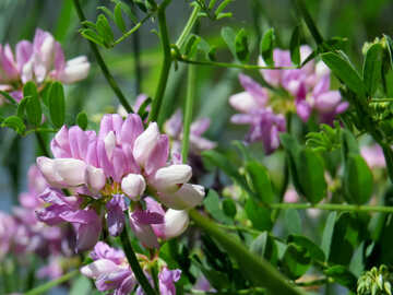 Wild flower pot №44489