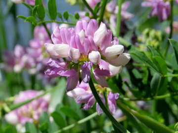 Wild flower pot №44490
