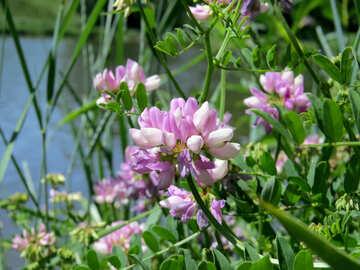 Wild flower pot №44491