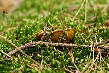 Forest mushroom №44859