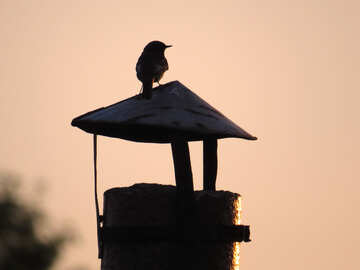 Silhouette of a bird at sunset №44471