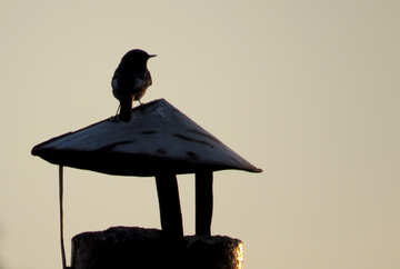 Silhouette of a bird at sunset №44472