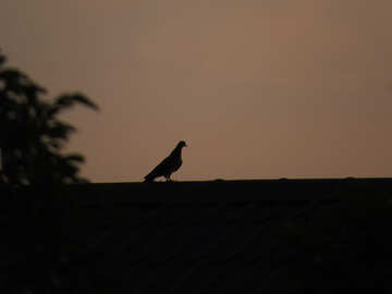 Silhouette of a bird at sunset №44475