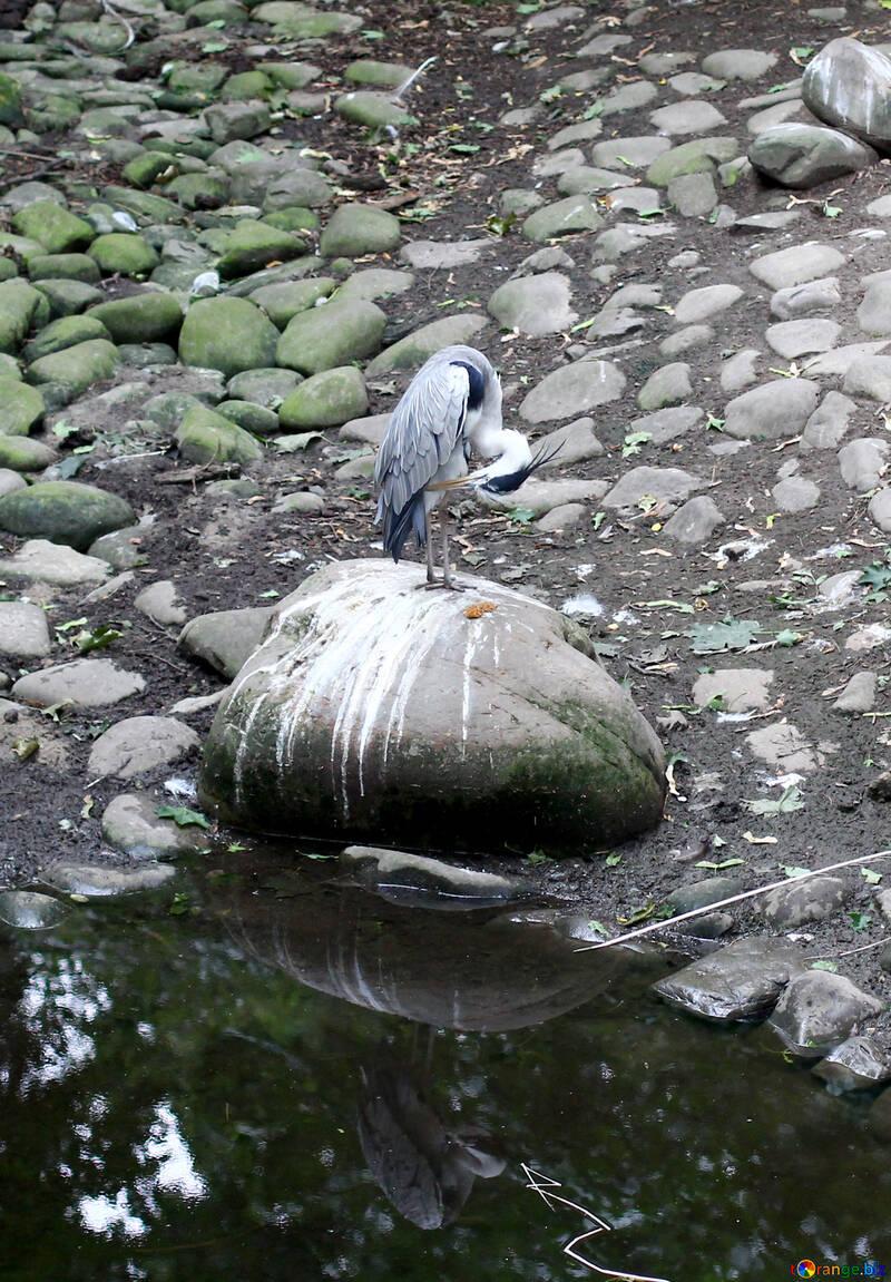 Oiseau sur un rocher №44887