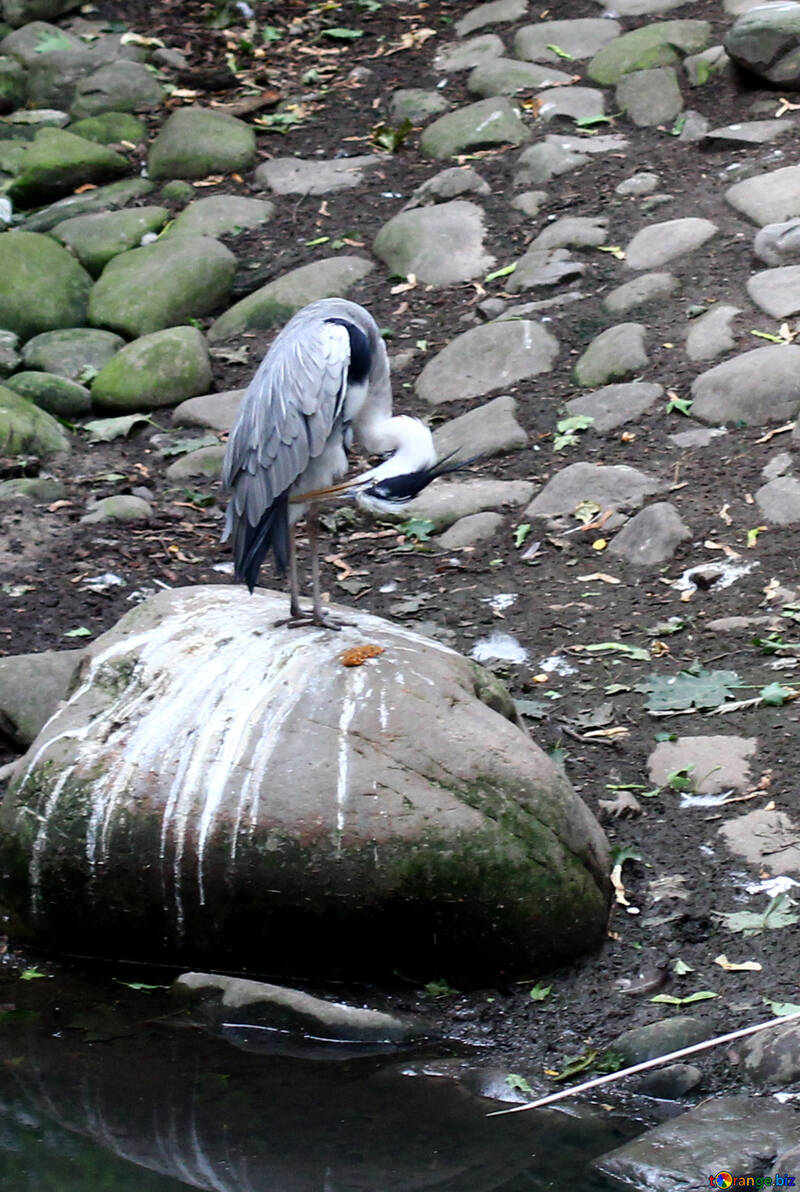 Oiseau sur un rocher №44888