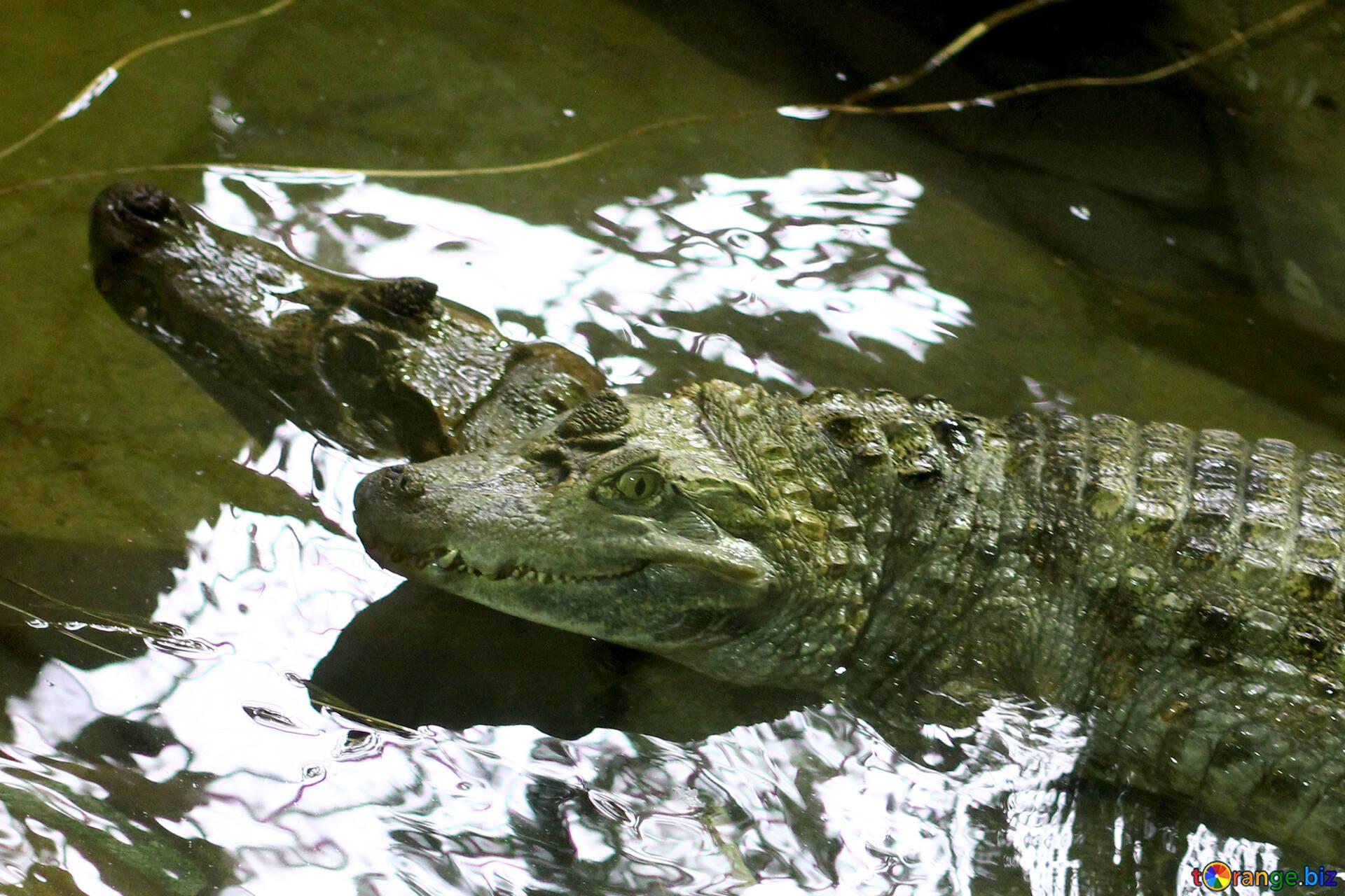 мальчиком прыгает что показывать в крокодиле с картинками начала
