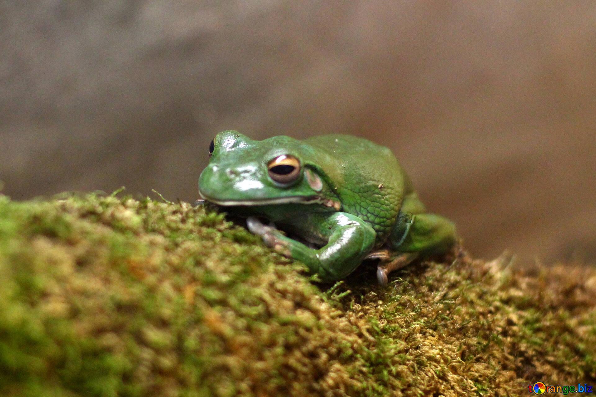 30 frosch bilder kostenlos  besten bilder von ausmalbilder