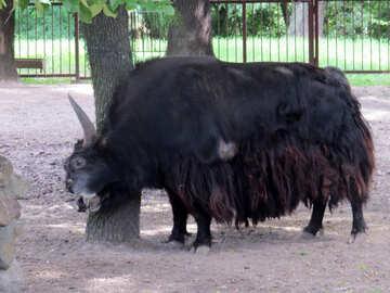 Buffalo №45168