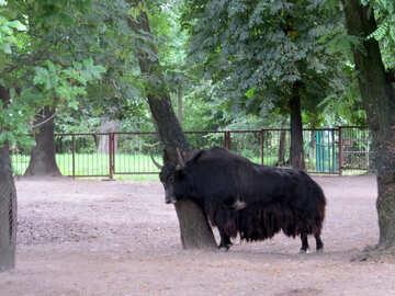 Buffalo №45164