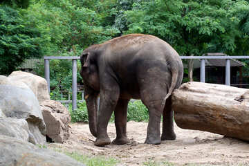 Elephant №45834