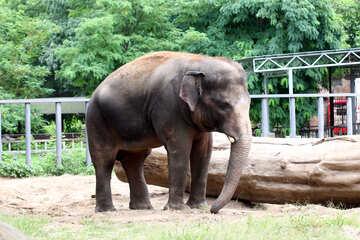 Elephant №45837