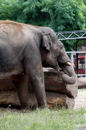 The strength of an elephant №45840
