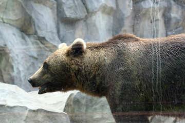 Bear portrait №45938