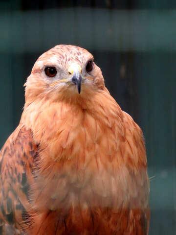 Hawk №45208