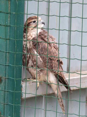 Hawk №45223