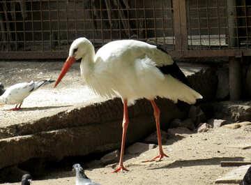 Stork №45158