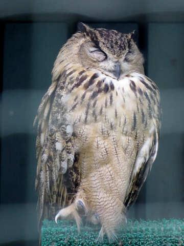 Owl №45225