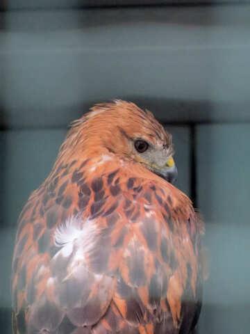 Hawk №45203