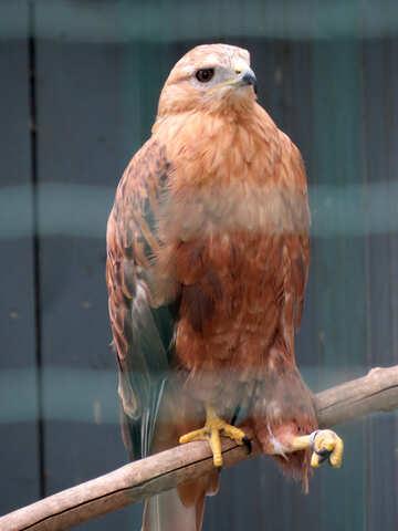 Hawk №45206