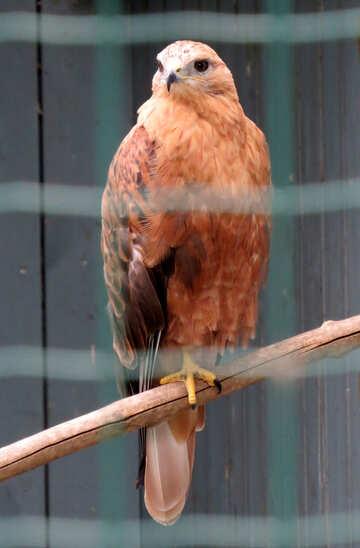 Hawk №45207