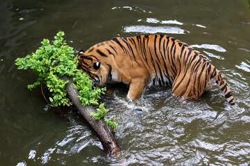 Tiger water №45698