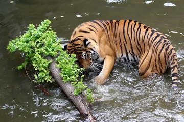 Tiger water №45702