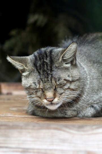 The cat sleeps №45358