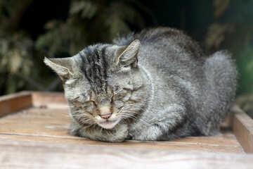 The cat sleeps №45360