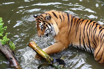 Tiger plays №45678
