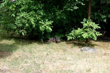 Kangaroo in the shade of trees №45862