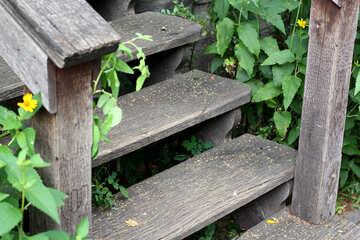 Old wooden steps №45805