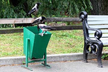 Crows and debris №45969